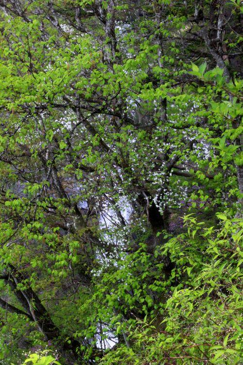 30,5,13 華厳の滝とツツジ1-6b.jpg