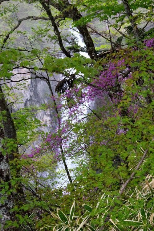 30,5,13 華厳の滝とツツジ1-9b.jpg