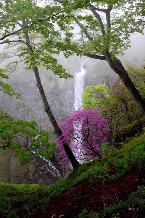 30,5,13 華厳の滝とツツジ2-1b.jpg
