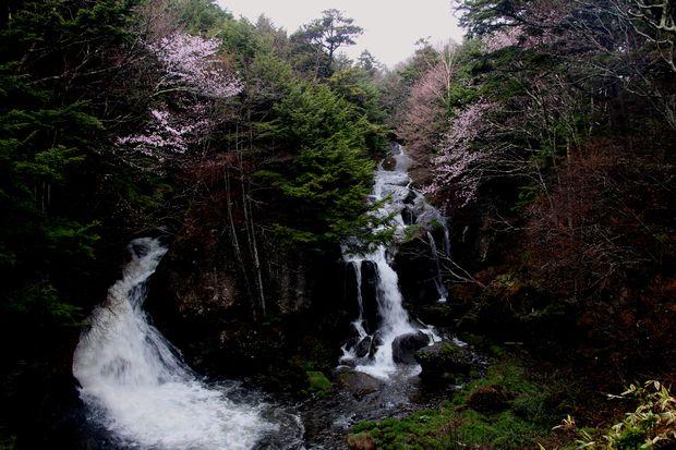 30,5,3竜頭の滝の桜1-2b.jpg