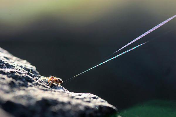 糸を放つクモ.jpg