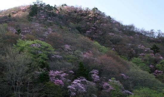20,5,4 月山のヤシオ6b.jpg