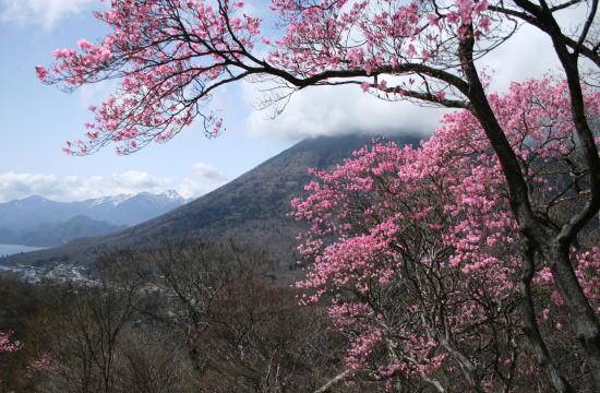 20,5,4 白根山、男体山とヤシオ2b.jpg