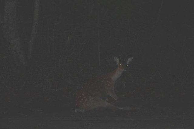 22,9,6 poor deer1-2.jpg