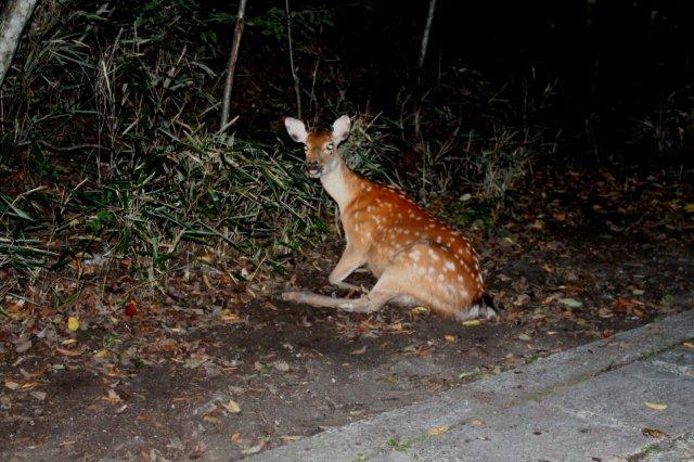 22,9,6 poor deer1-7.jpg
