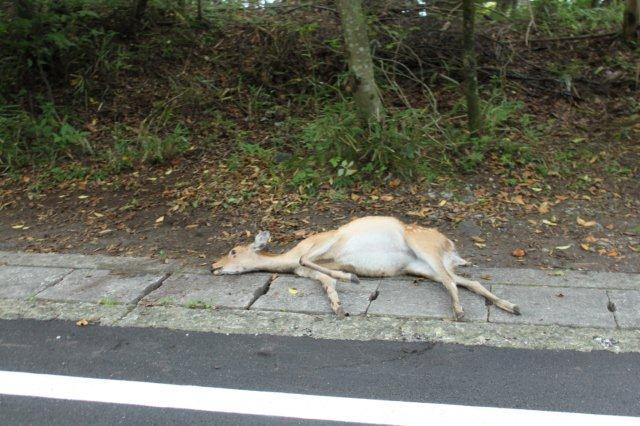 22,9,6 poor deer2-1'.jpg