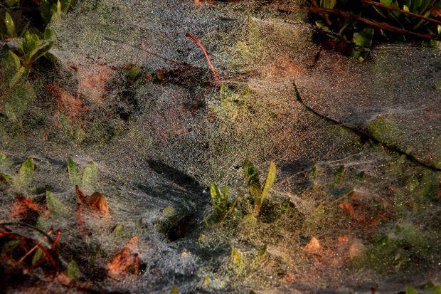 28,7,1 雲の巣の虹2-7b.jpg