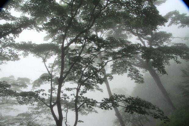 28,7,23 霧の華厳1-3b.jpg