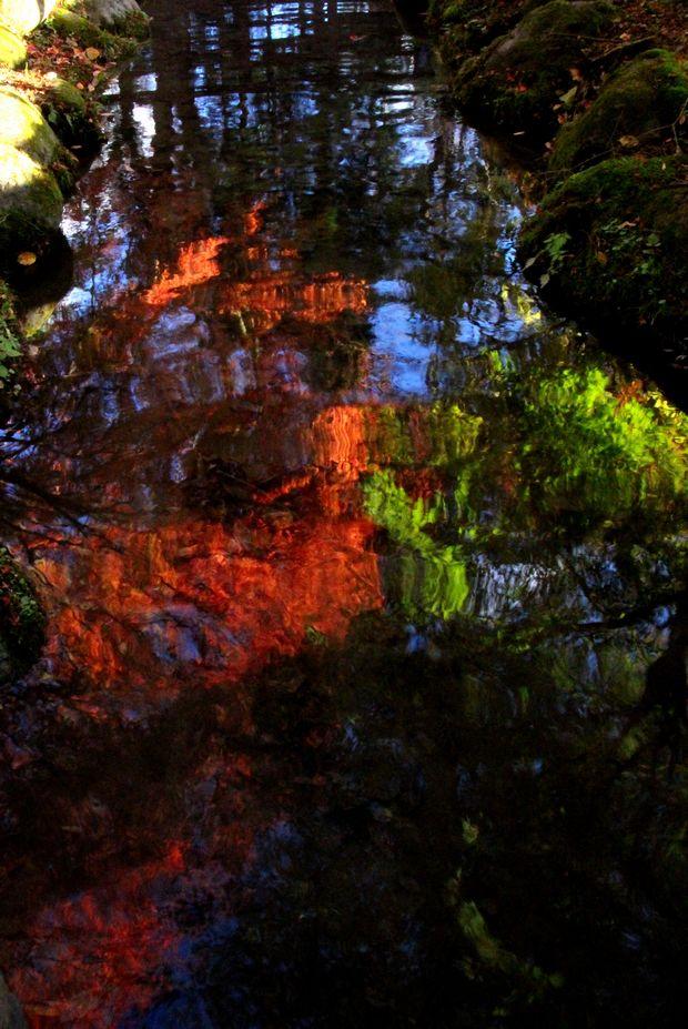 29,10,31 水に映る紅葉1-2b.jpg