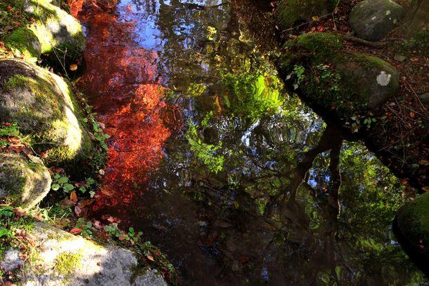 29,10,31 水に映る紅葉1-6b.jpg