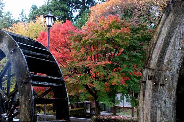 29,11,1杉並木公園の紅葉1-4b.jpg