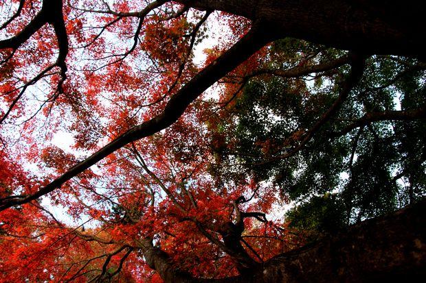 29,11,1杉並木公園の紅葉2-1b.jpg