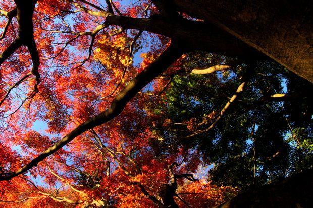 29,11,1杉並木公園の紅葉2-7b.jpg