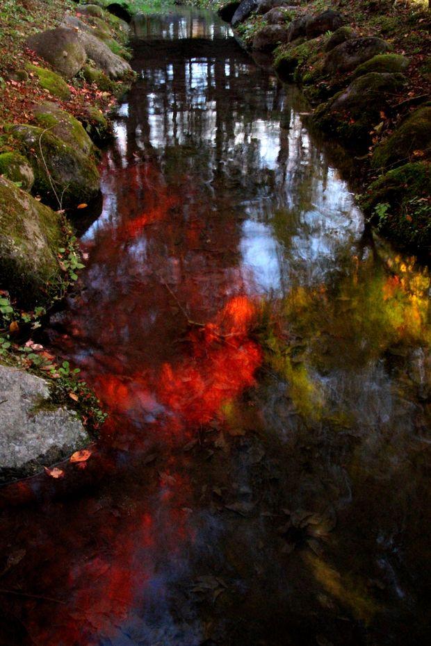 29,11,1水に映る紅葉1-2b.jpg