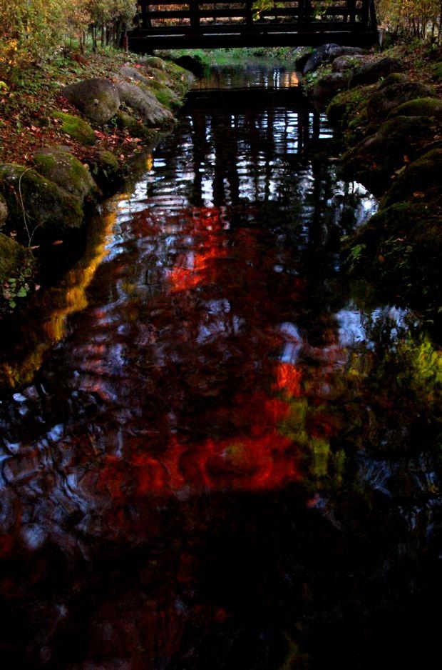 29,11,1水に映る紅葉1-4'b.jpg