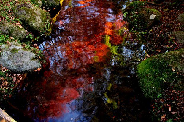 29,11,1水に映る紅葉1-8b.jpg