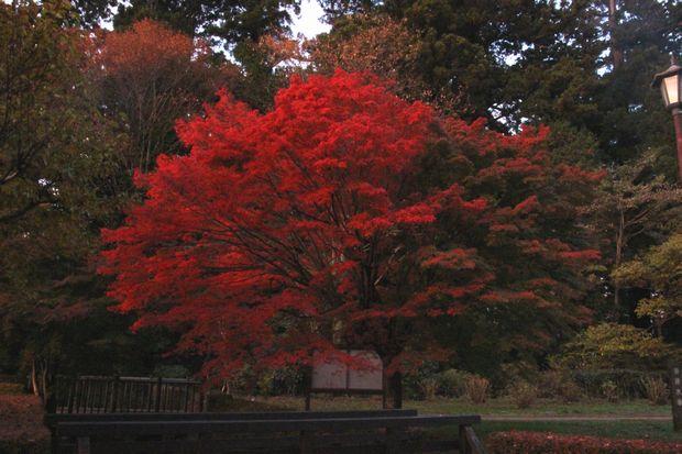 29,11,2杉並木公園の紅葉1-2b.jpg