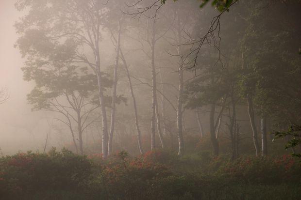 29,7,8 小田代原の日の出とレンげツツジ2-1b.jpg