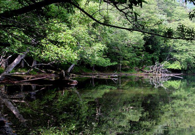 29,8,5 湯の湖の鏡像2-2b.jpg