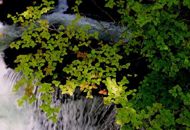 29,9,24竜頭の滝と紅葉1-1b.jpg
