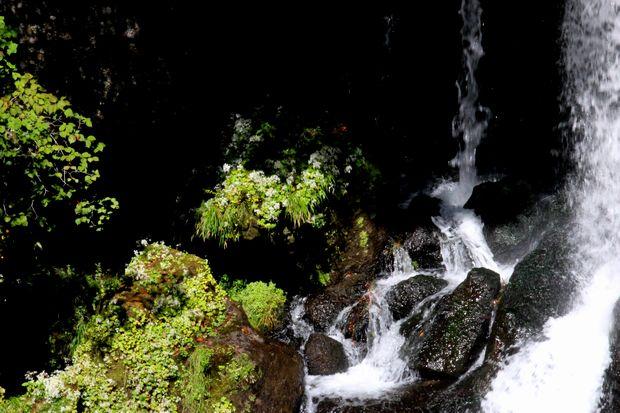 29,9,24竜頭の滝のシロヨメナ1-1b.jpg