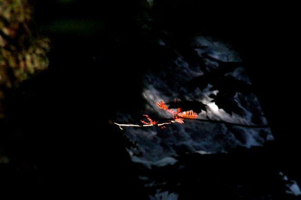 29,9,9湯の湖の紅葉1-6b.jpg