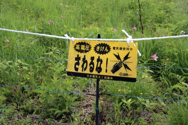 30.6.23 ヒメサユリ2-9b.jpg