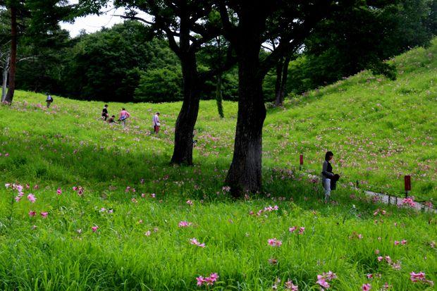 30.6.23 ヒメサユリ8-3 b.jpg