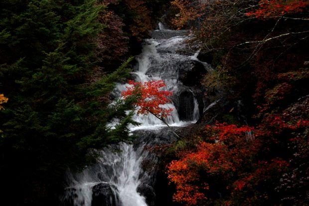 30,10,08 竜頭の滝の紅葉1-4b.jpg