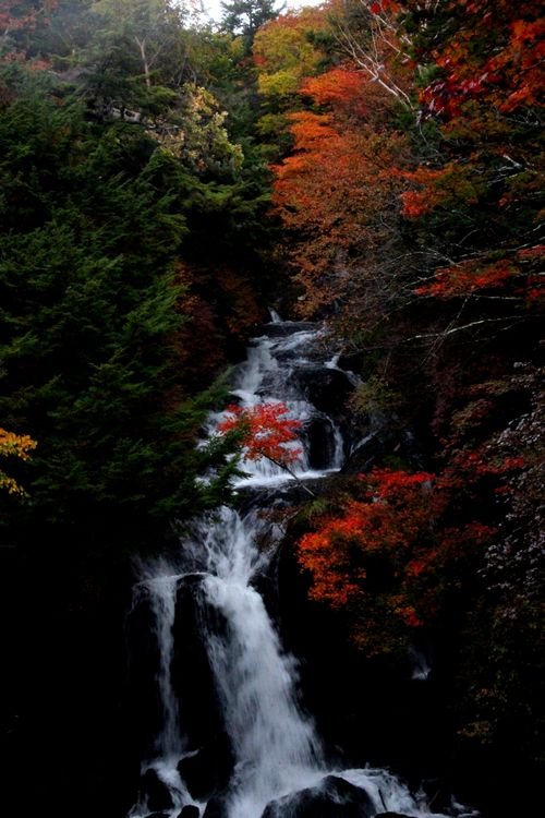 30,10,08 竜頭の滝の紅葉1-6b.jpg