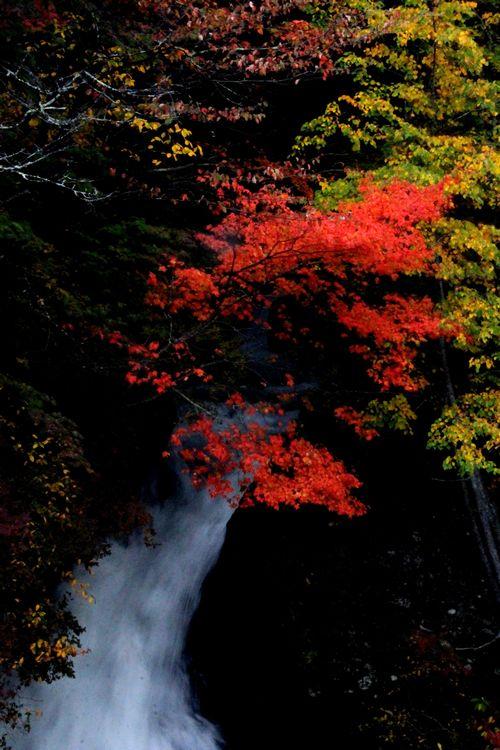 30,10,08 竜頭の滝の紅葉2-2'b.jpg