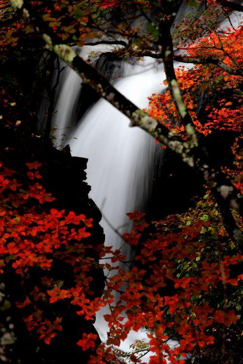30,10,08 竜頭の滝の紅葉3-6b.jpg