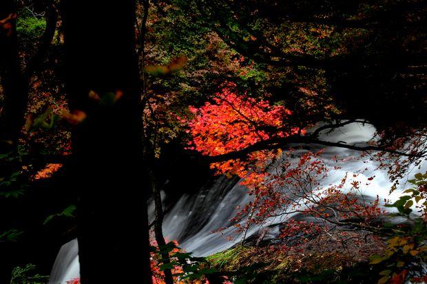 30,10,08 竜頭の滝の紅葉3-8b.jpg