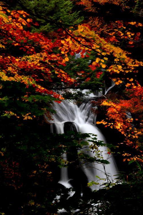 30,10,08 竜頭の滝の紅葉3-9b.jpg