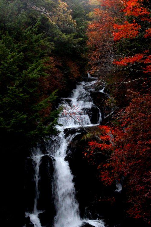 30,10,13竜頭の滝の紅葉1-2b.jpg