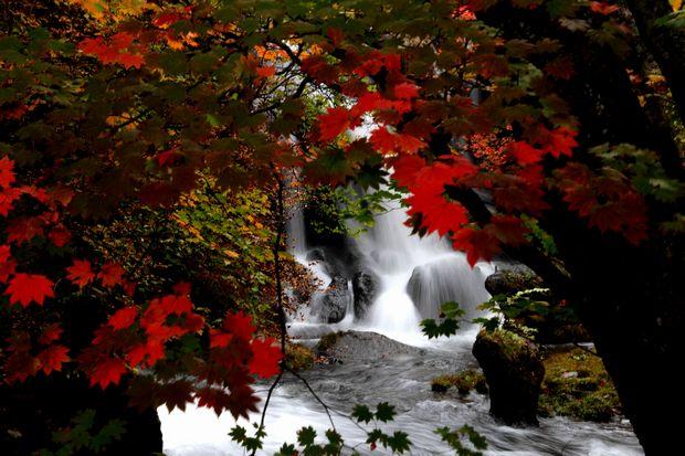 30,10,13竜頭の滝の紅葉1-4b.jpg