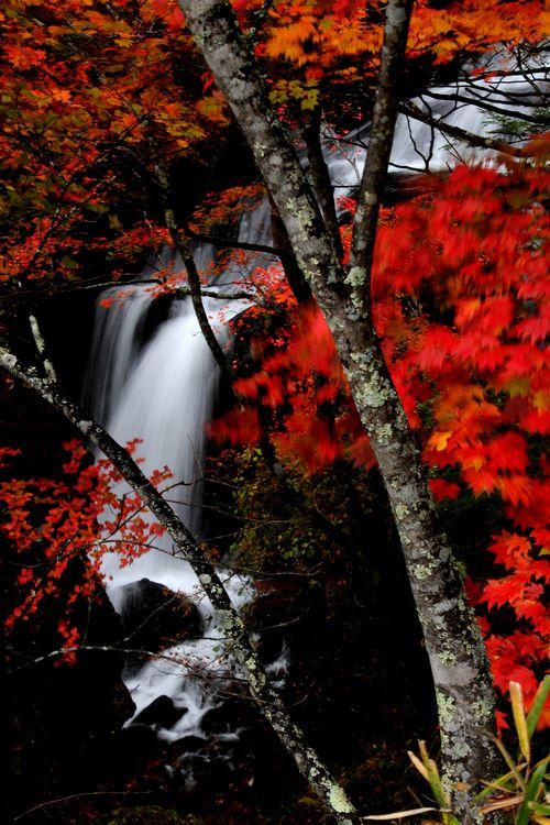 30,10,13竜頭の滝の紅葉2-4b.jpg
