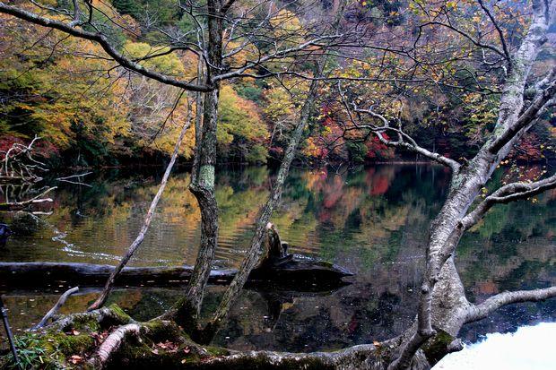 30,10,14湯の湖のオブジェと紅葉1-4b'.jpg