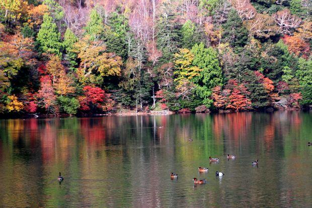 30,10,14湯の湖の紅葉3-2b.jpg
