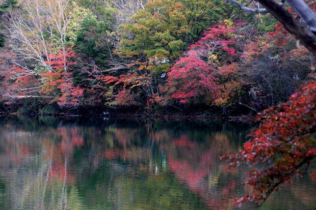 30,10,14湯の湖の紅葉3-8b.jpg
