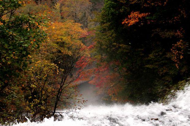 30,10,14湯滝の紅葉1-1'b.jpg