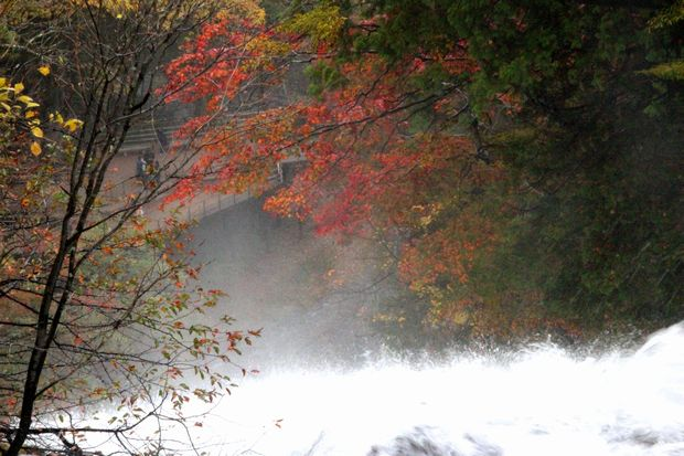 30,10,14湯滝の紅葉1-4b.jpg
