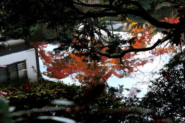30,11,10 逍遥園の紅葉5-4b.jpg