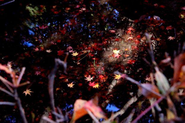 30,11,10杉並木公園の紅葉1-6b.jpg