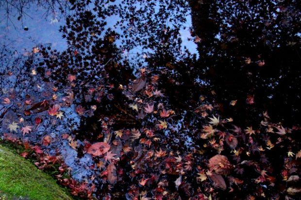 30,11,13杉並木公園の紅葉1-3b.jpg