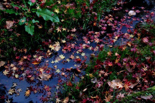 30,11,13杉並木公園の紅葉1-9b.jpg