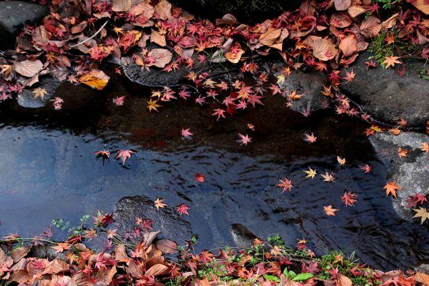 30,11,16杉並木公園の紅葉1-1b.jpg