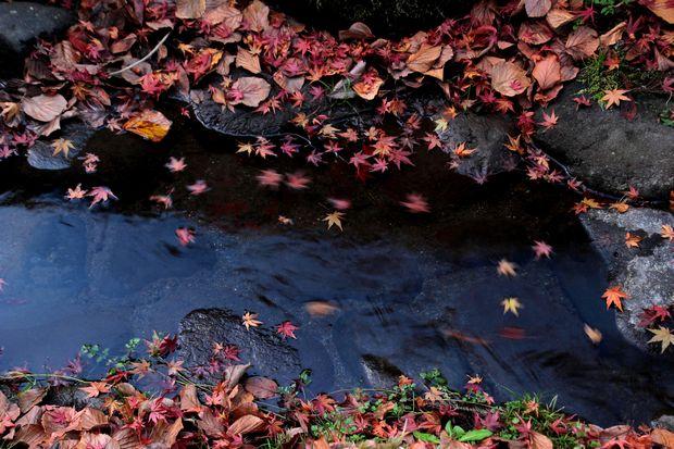 30,11,16杉並木公園の紅葉1-2b.jpg