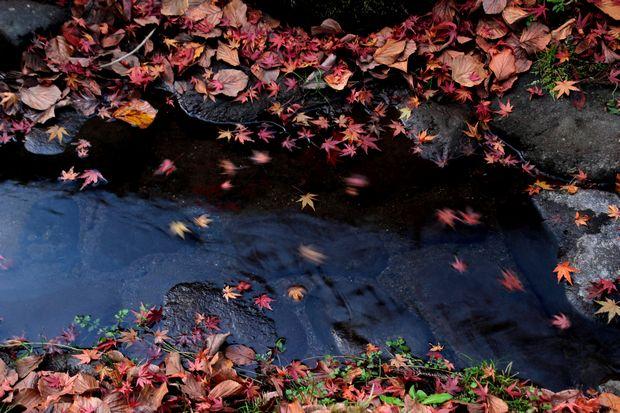 30,11,16杉並木公園の紅葉1-3b.jpg