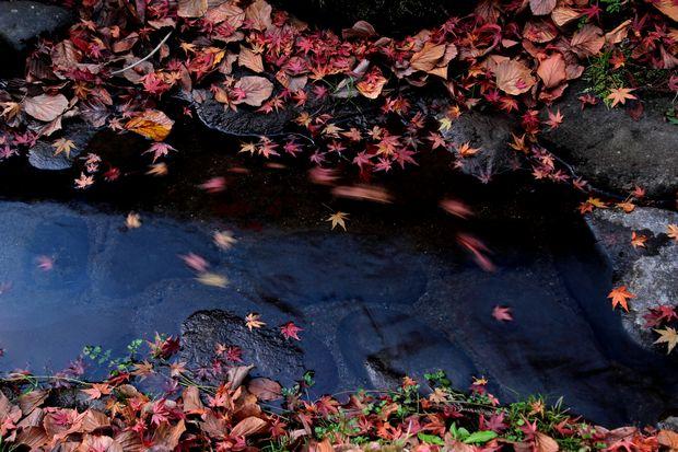 30,11,16杉並木公園の紅葉1-5b.jpg